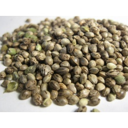 Feminized Cannabis Seeds Mix Pack